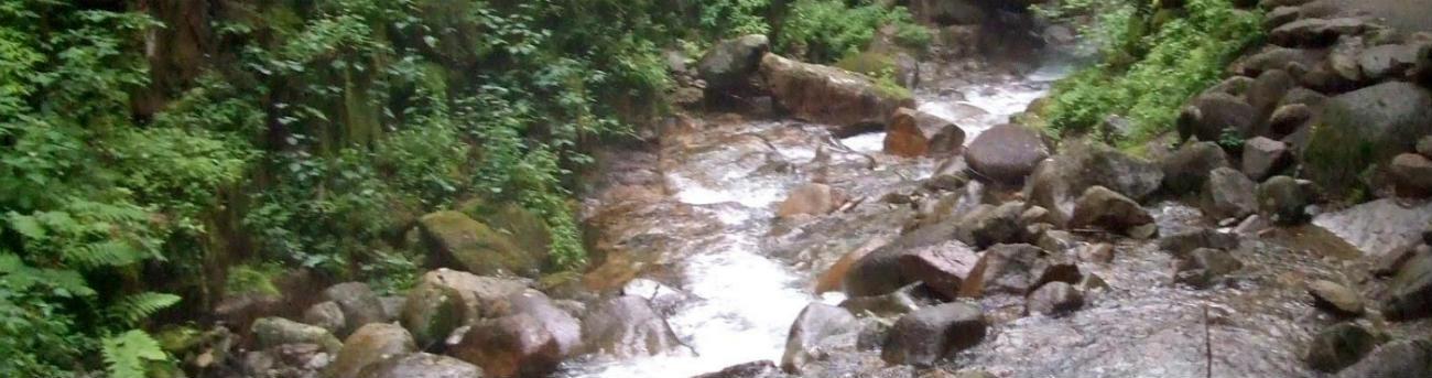 Floresta e água